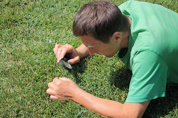How to identify and treat 5 Common Lawn Diseases